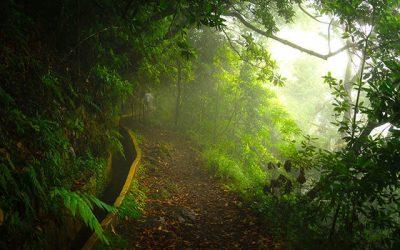 Madeira Island Wins Europe's Leading Island Destination 2018 Award