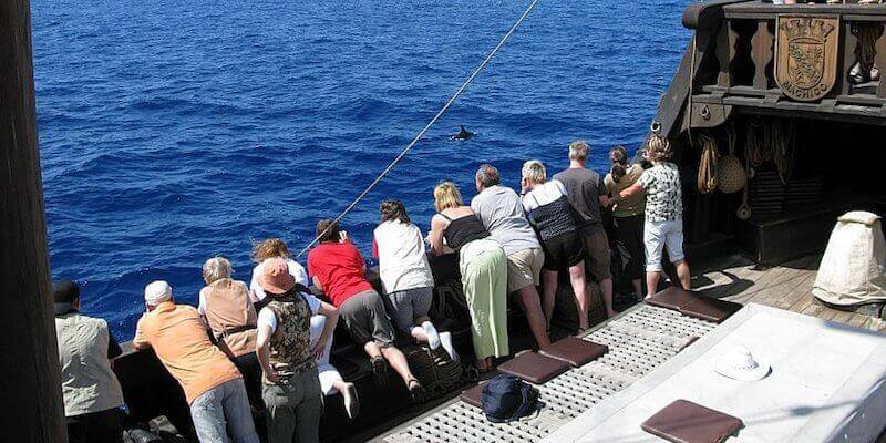 Boat Tours - What To Do In Madeira Island During Your Vacation?