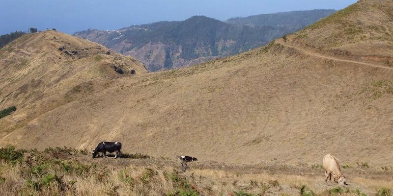 Jeep Tours - What To Do In Madeira Island During Your Vacation?