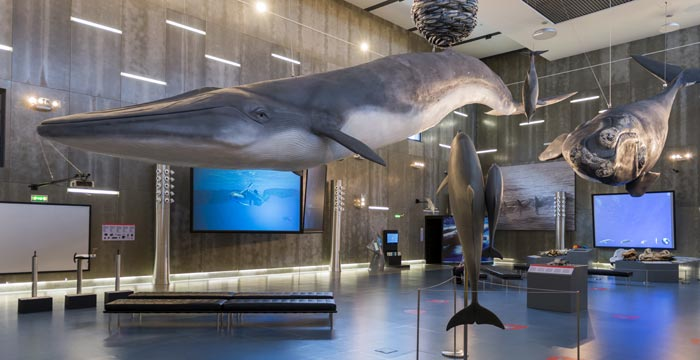 Whale Museum