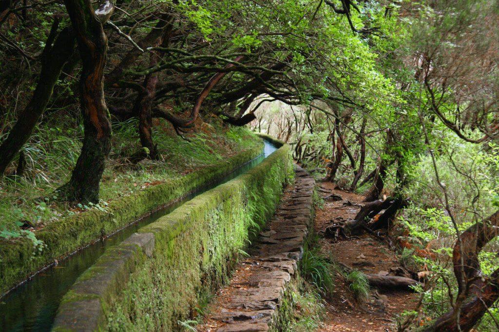 Caminhada de Levada na Ilha da Madeira - Image 2