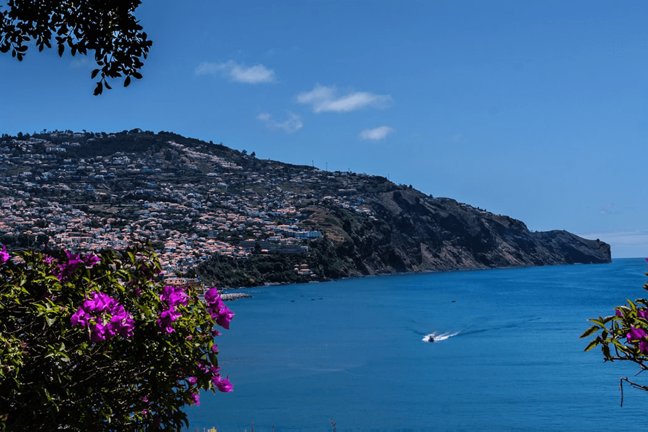 All you need to know about Madeira Flowers